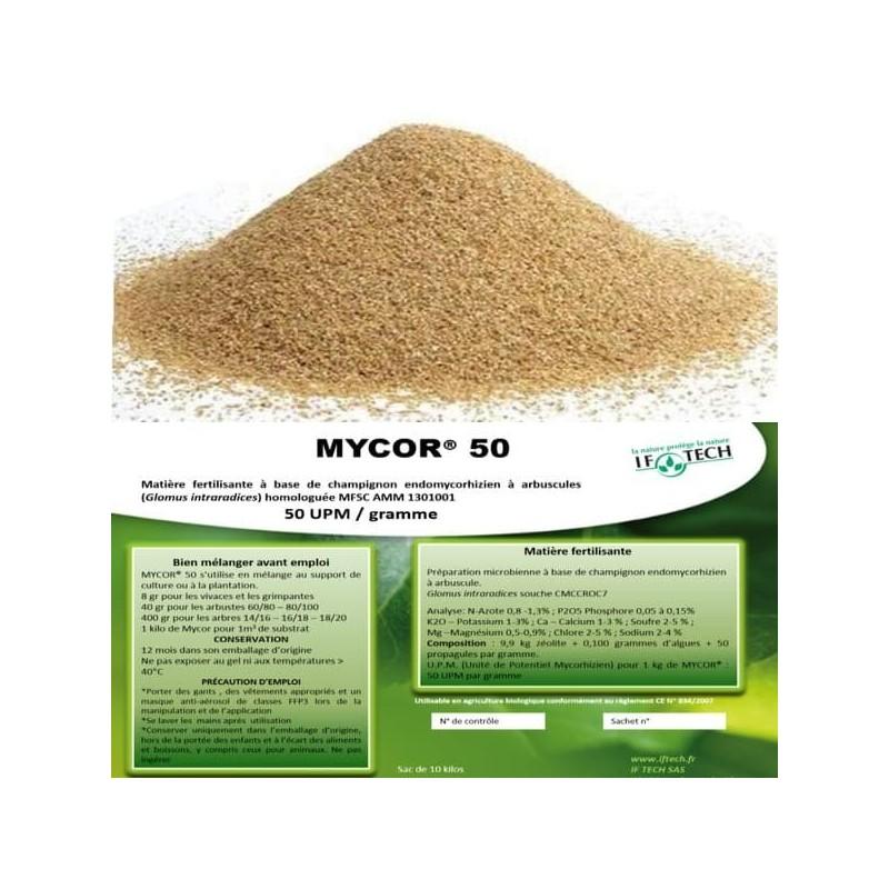 mycorhize Glomus intraradices